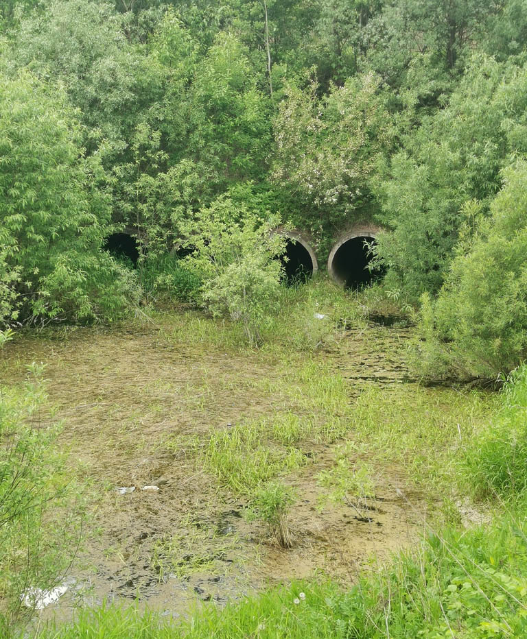 Дошли до Подольского гидроузла... Перед ним заросшее болотце.