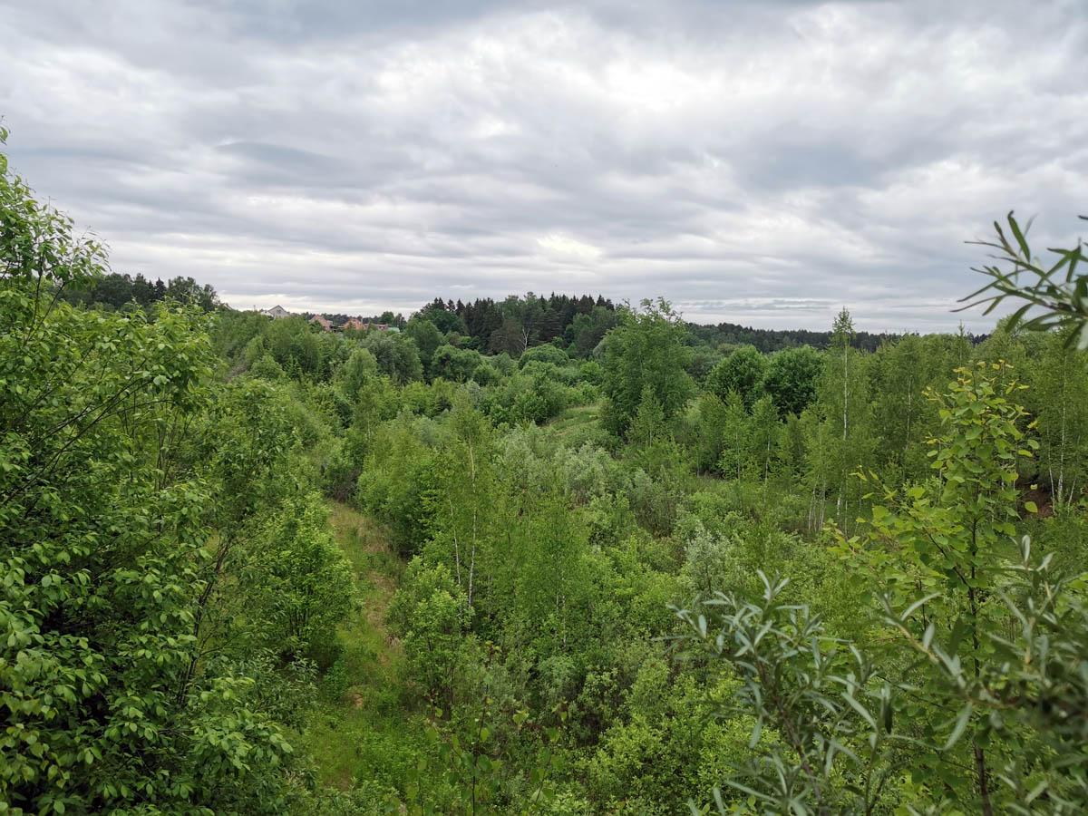 Заросшее деревьями и кустарником дно Подольского моря.