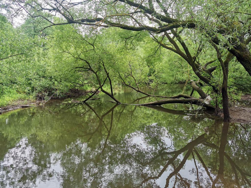12 июня 2021г. Река Рожайка.