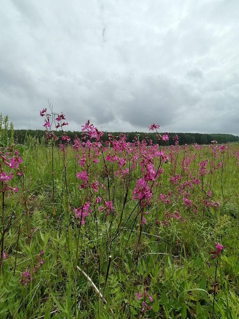 Цветы между рекой и Ушмарским лесом.