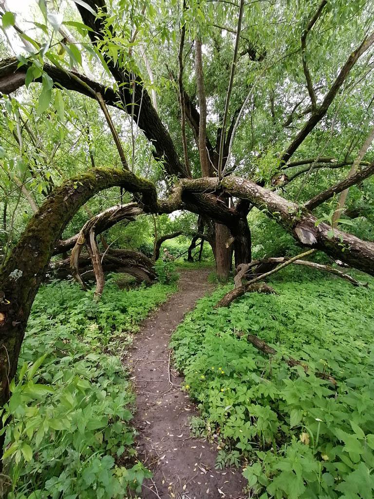 Еще одно сказочное дерево выше по течению.