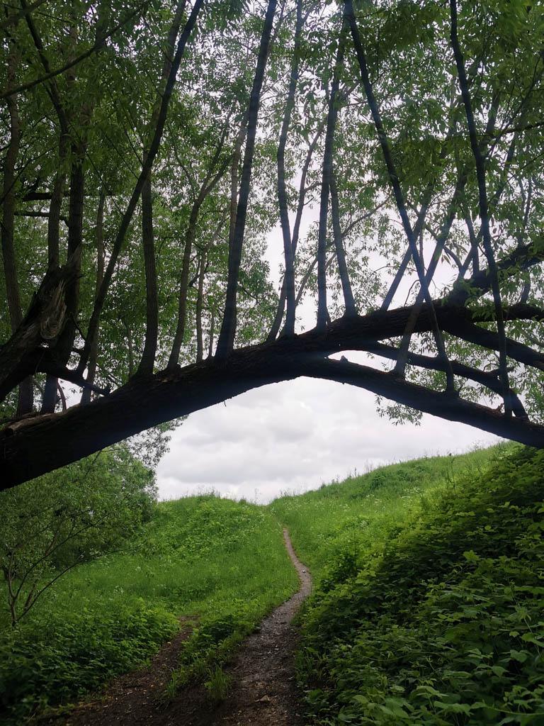 Тоже очень харизматичное дерево.