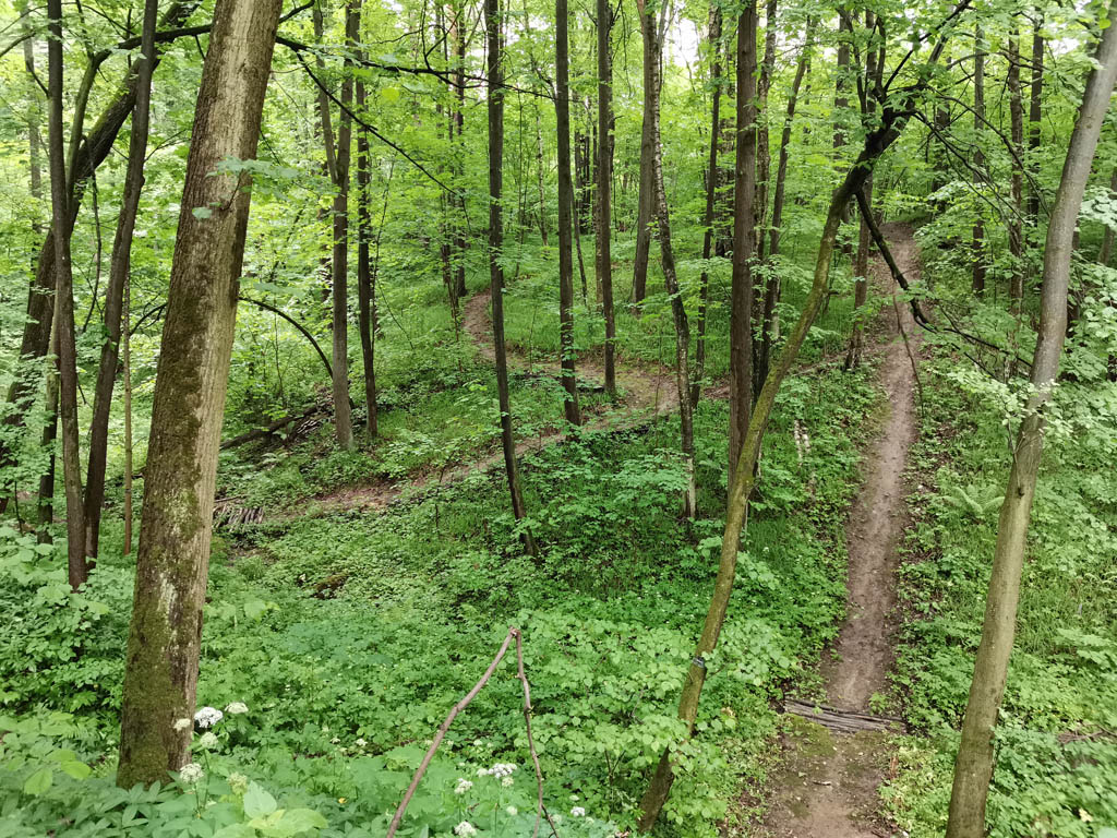 А нам месить глину надоело, поэтому углубились в лес. Здесь велосипедисты проложили петляющую трассу с крутыми поворотами, спусками и подъемами. Особо сложные участки трассы обозначены табличками.
