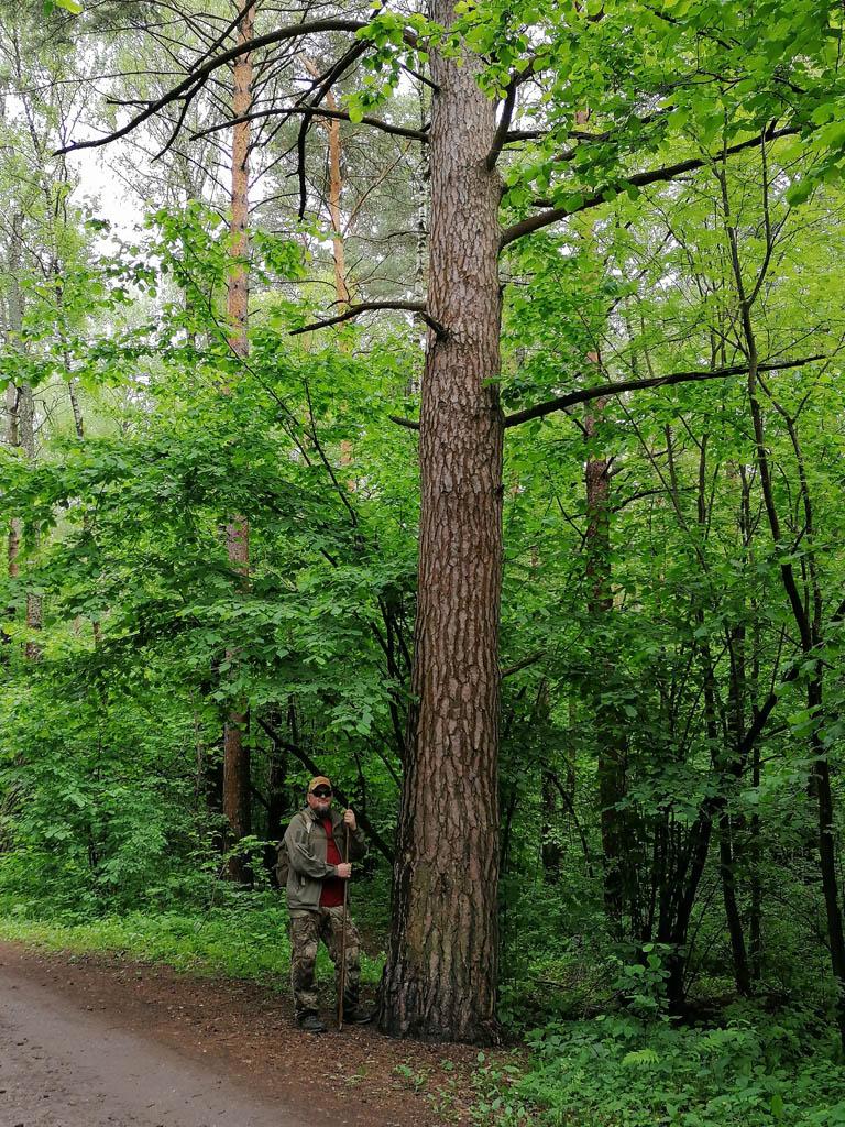 Фото перед выходом из леса.
