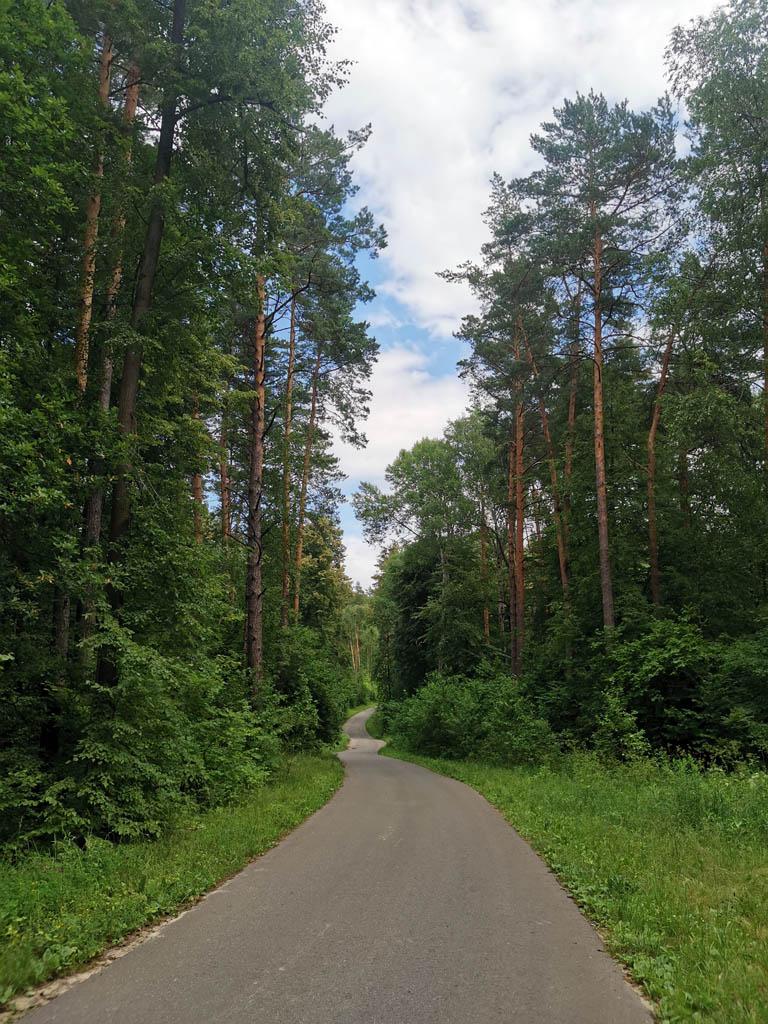 Дорога с ровным покрытием извивается между деревьев...