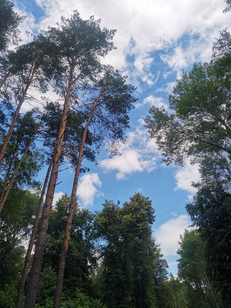 В лесу уже поспела земляника. Красивое небо и сосны. Все здорово, кроме кровососущих насекомых, которые навязчиво жужжат у лица.