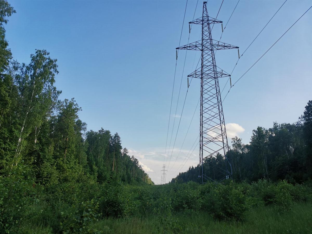 Лес в нескольких местах разрезают просеки ЛЭП