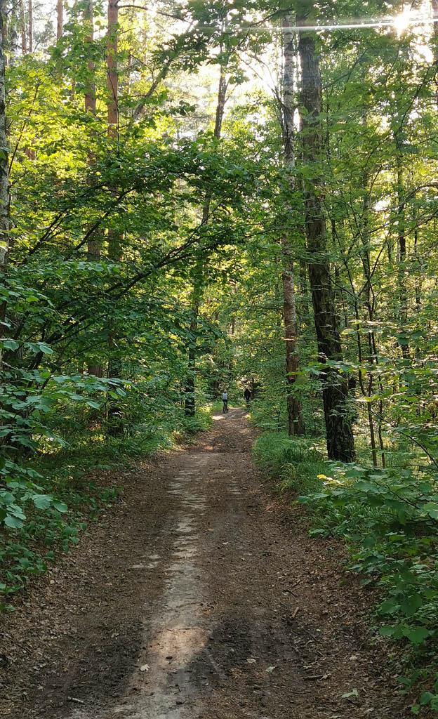 В лесу идти гораздо комфортнее, чем по асфальту под палящим солнцем, если бы не насекомые. Комары и слепни достали!