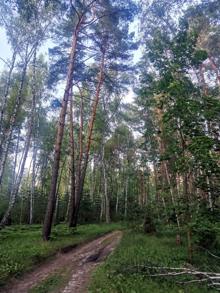 Продолжаем идти по лесу. Встретили девушку с полным ведром черники!