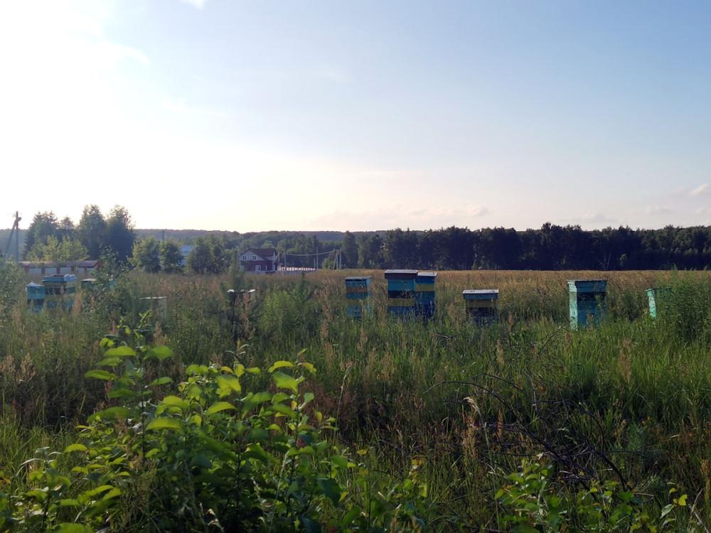 На окраине села Батайки стоят улья. Все-таки еще не все пчелы погибли.