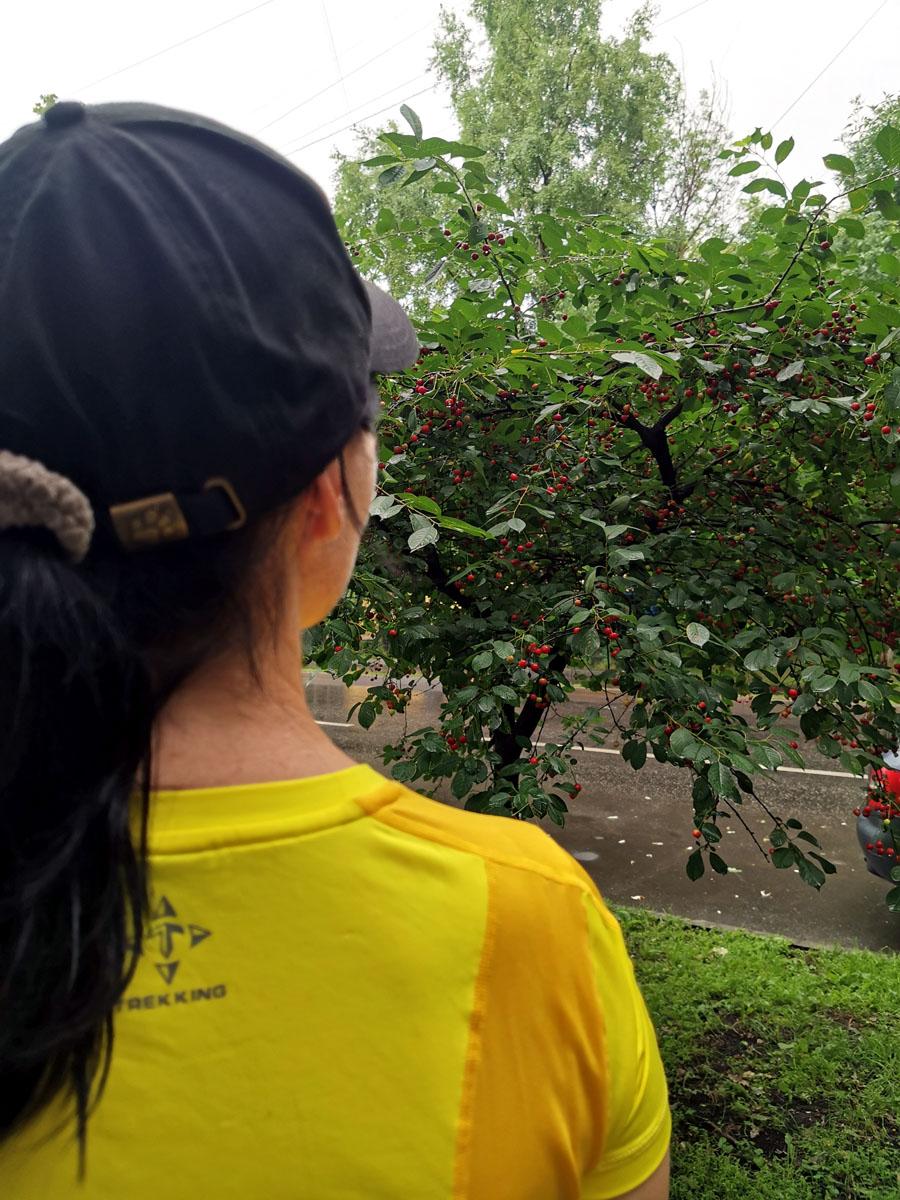 На соседней от парка улице во всю плодоносит вишня!