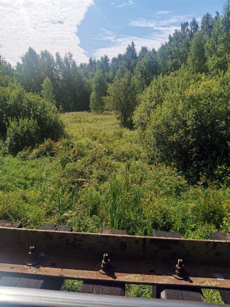 Овражек в лесу. Фото с жд моста