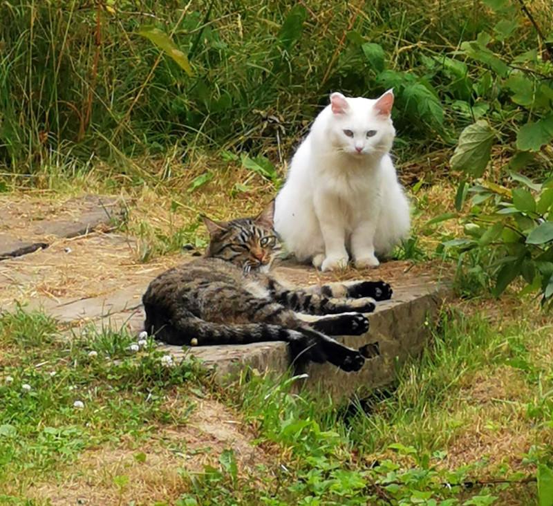 А дома котики смотрят на меня и как бы говорят: И охота тебе шляться в такую жару? #пятничныекотики