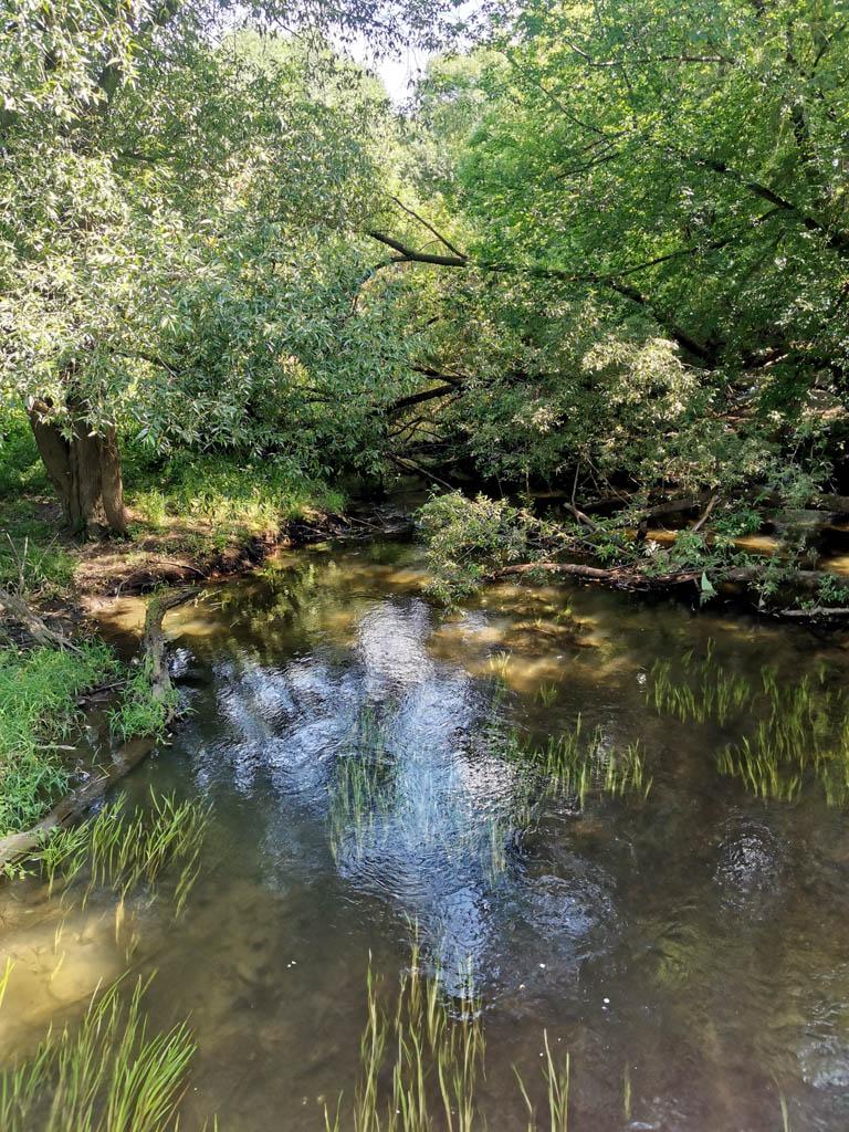 Фото реки с моста вниз по течению...