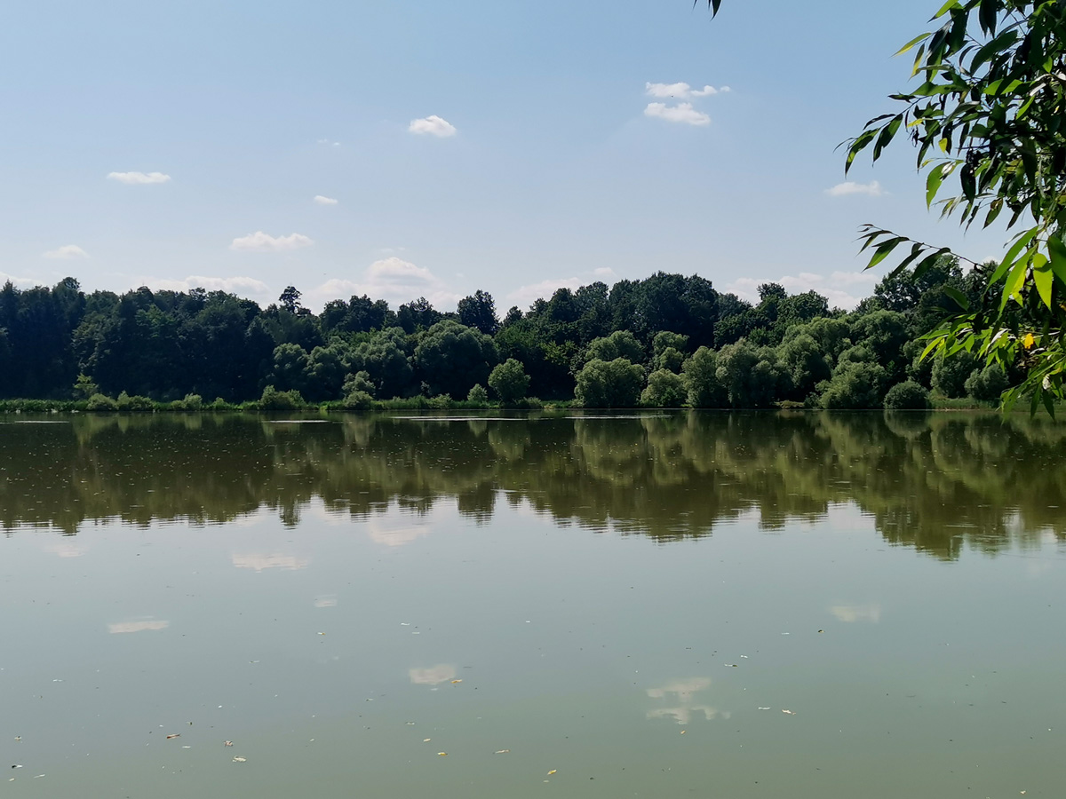 На противоположном берегу пруда за деревьями прячется усадебный дом и ротонда.