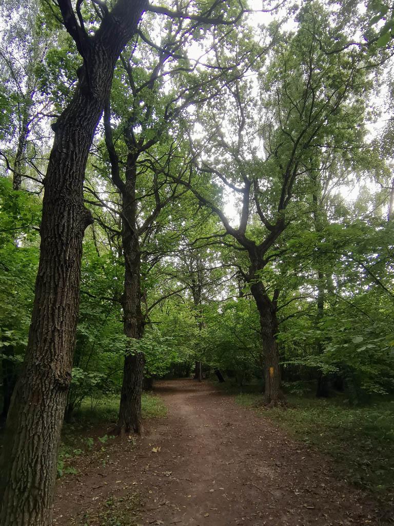 Начало пути лежало через Аннинскую часть Битцевского леса, а точнее от станции метро Анино, Далее, в обход ограды воинской части через 29-й квартал Битцевского леса.