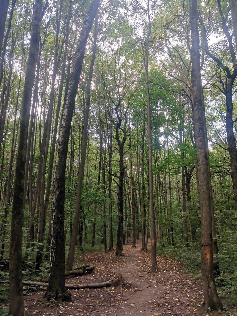 Надо сказать, что Бицевский лес весь разрезан тропинками и дорожками вдоль и поперек и по диагоналям. Причем, часть троп не отмечено на карте, другая часть отмечена, но почти заросла. Поэтому, не всегда с ходу можно определить, когда пора делать поворот и на какую дорожку...