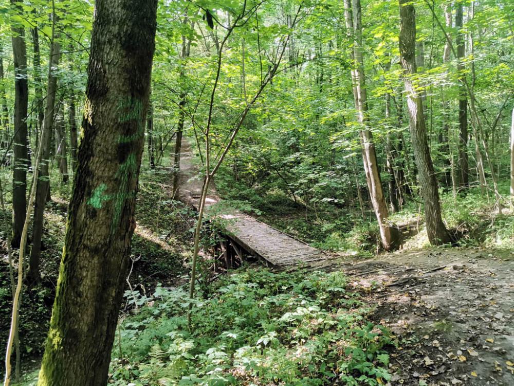 Парк разрезан не только тропами, но и руслами рек, ручейков, оврагами и рвами. часть из них можно пройти по руслу, а часть по мостикам.