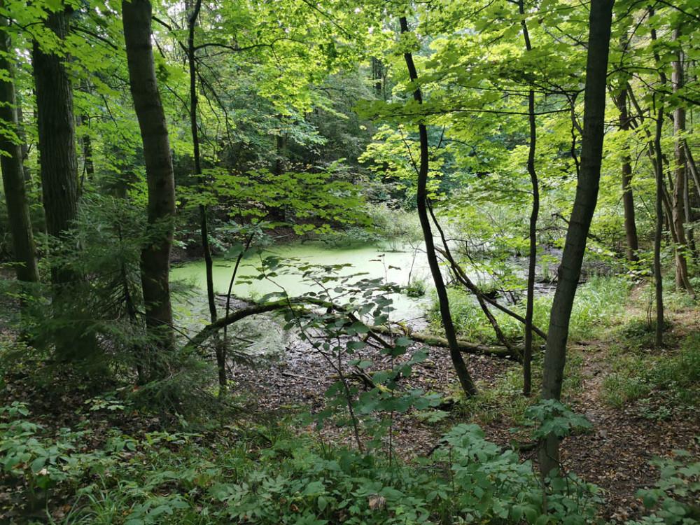 Небольшое болото. Раньше был пруд.