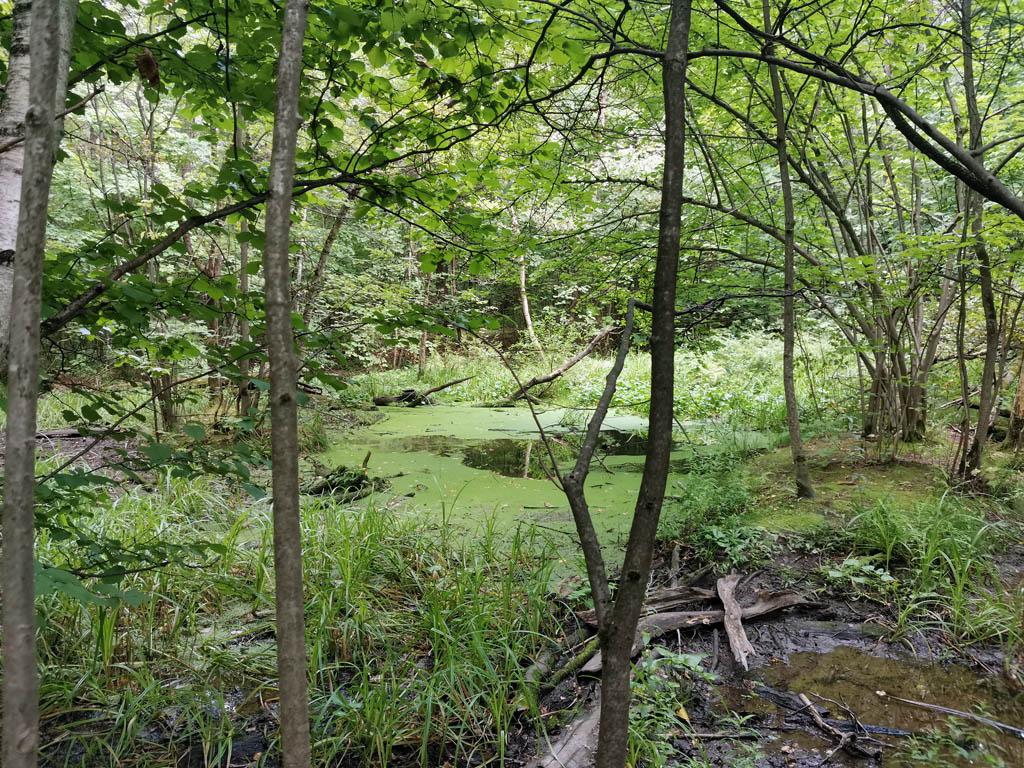 Очередное болото...