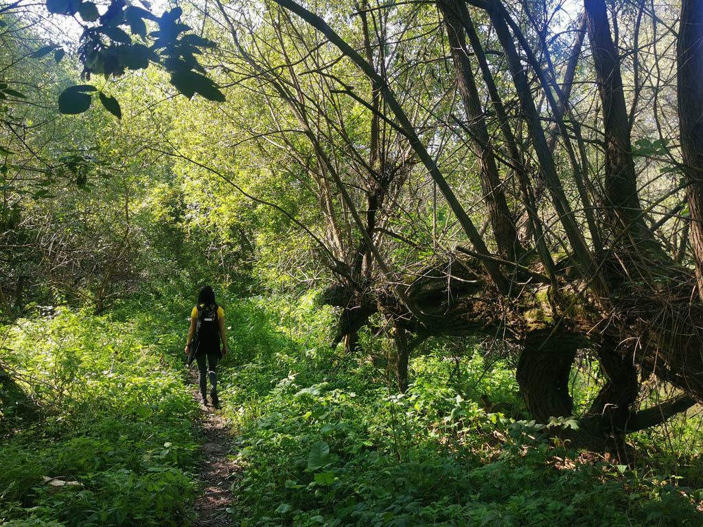 Вернемся к прекрасному.  Под конец лета прогулялись вдоль реки Рожайки по одному из моих любимых маршрутов.