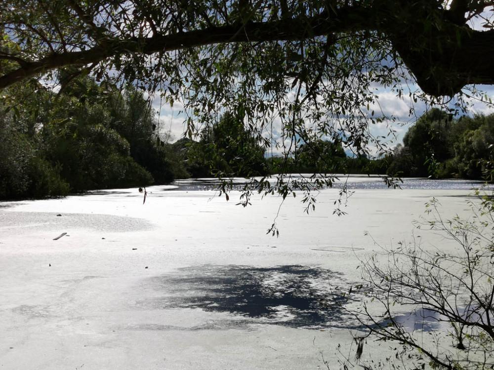 Заболоченный пруд в деревне Павловское.