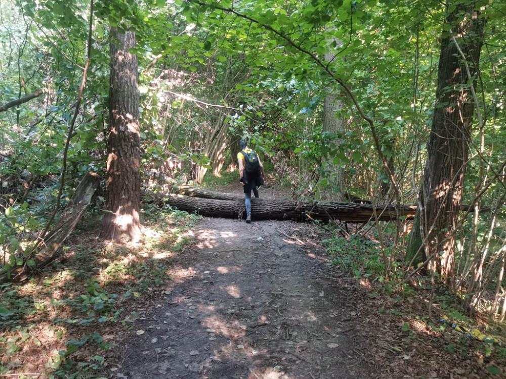 Тропинка проходит через лес вдоль ограды территории Дома отдыха «Салют»