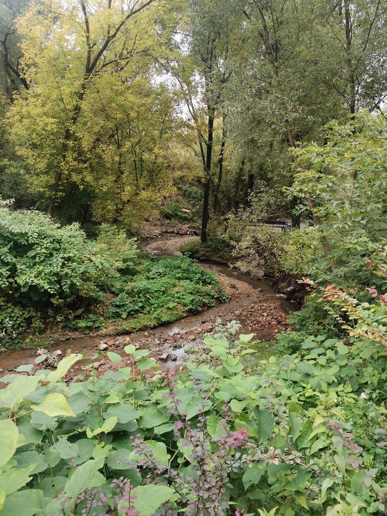 В этой части вдоль реки высадили культурные кустарники.