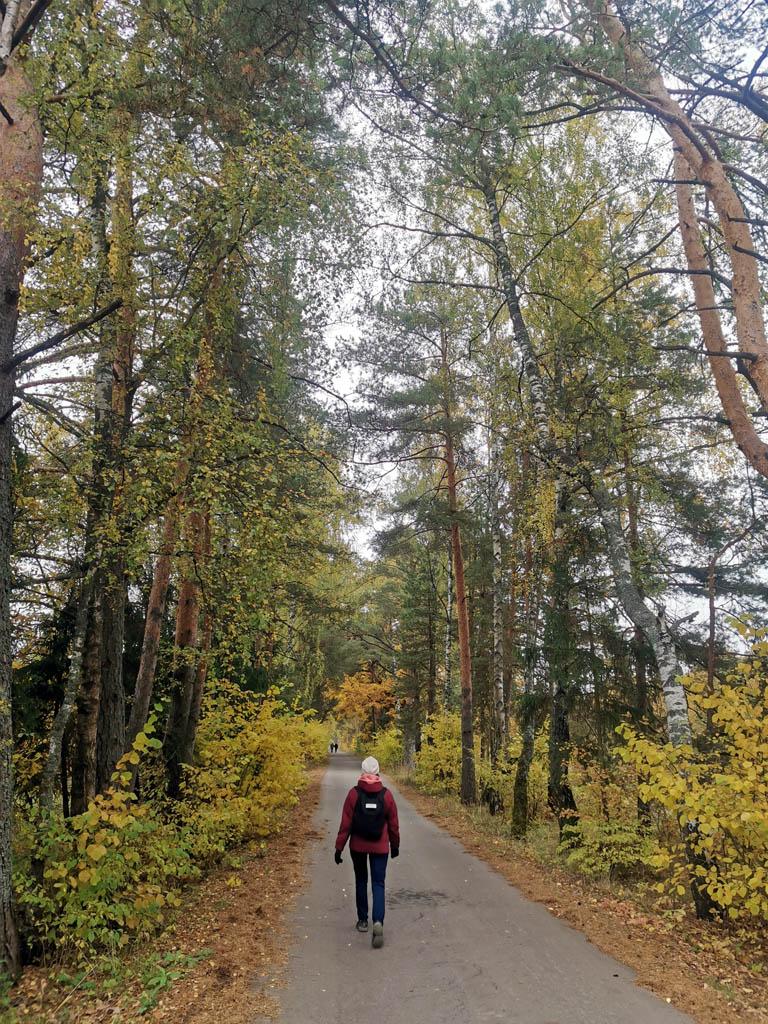 Пешую часть похода начали от железнодорожной платформы Полушкино. Сначала путь лежал по обочине неширокого шоссе, а потом по еще более узкой аллее.  За тем и вовсе по тропинка через лес...