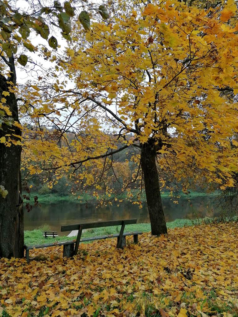 На берегу реки множество скамеек на любой вкус.