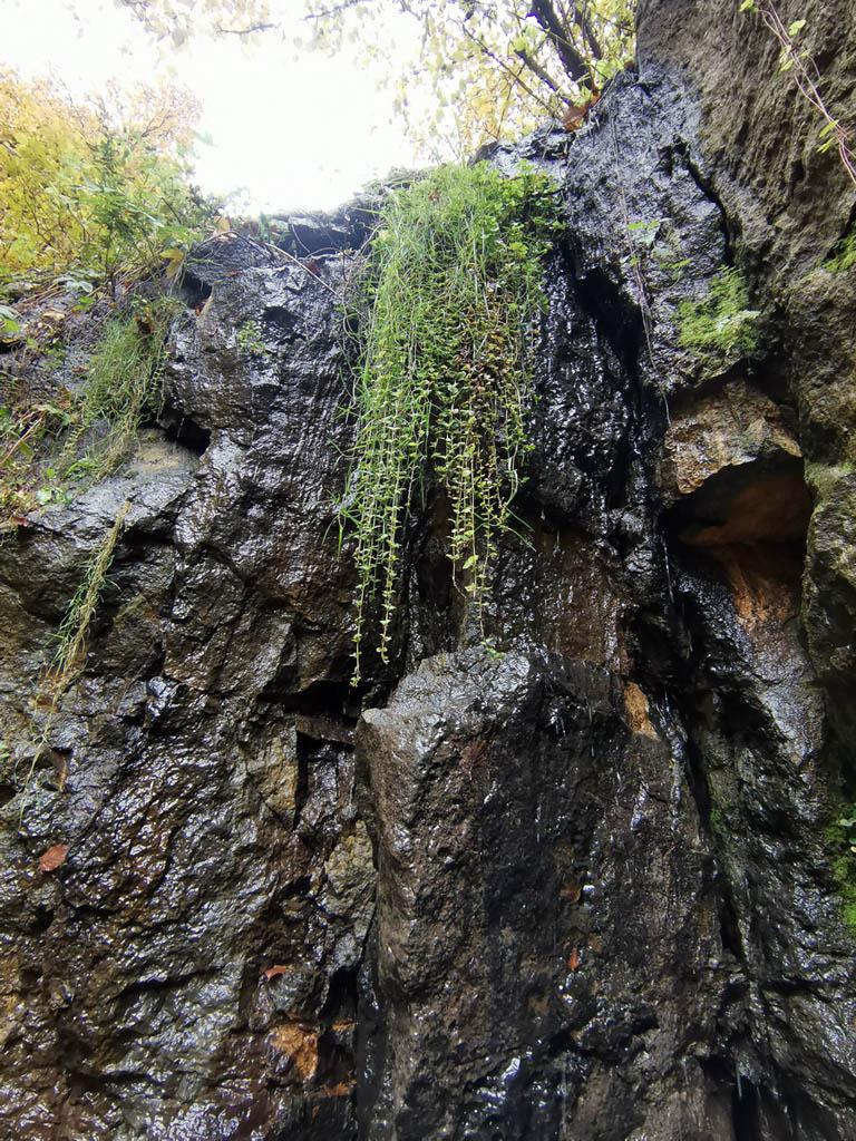 Капающий водопад. Здесь ручей каплями стекает по отвесной стене каменоломни. Зимой вода превращается в лед с голубым оттенком.