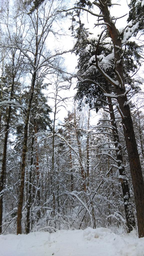 Примерно через 4км (половину из которых шли по лесному шоссе) немного не доходя до реки Рожайка и села Битягово, свернули в лес...