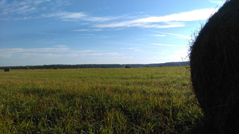 Августовский пейзаж... В этом году на поле недалеко от моей усадьбы впервые скошенную траву собирали не в стога, а в рулоны.