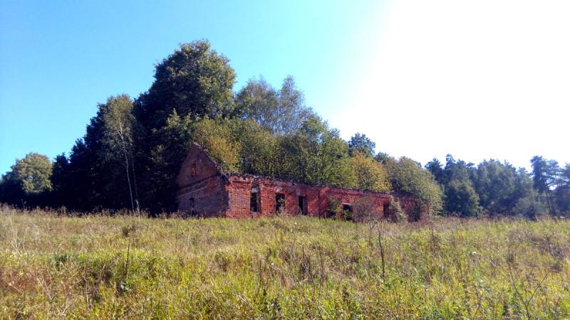 Еще одно усадебное строение. Внутри него уже вырос лес.