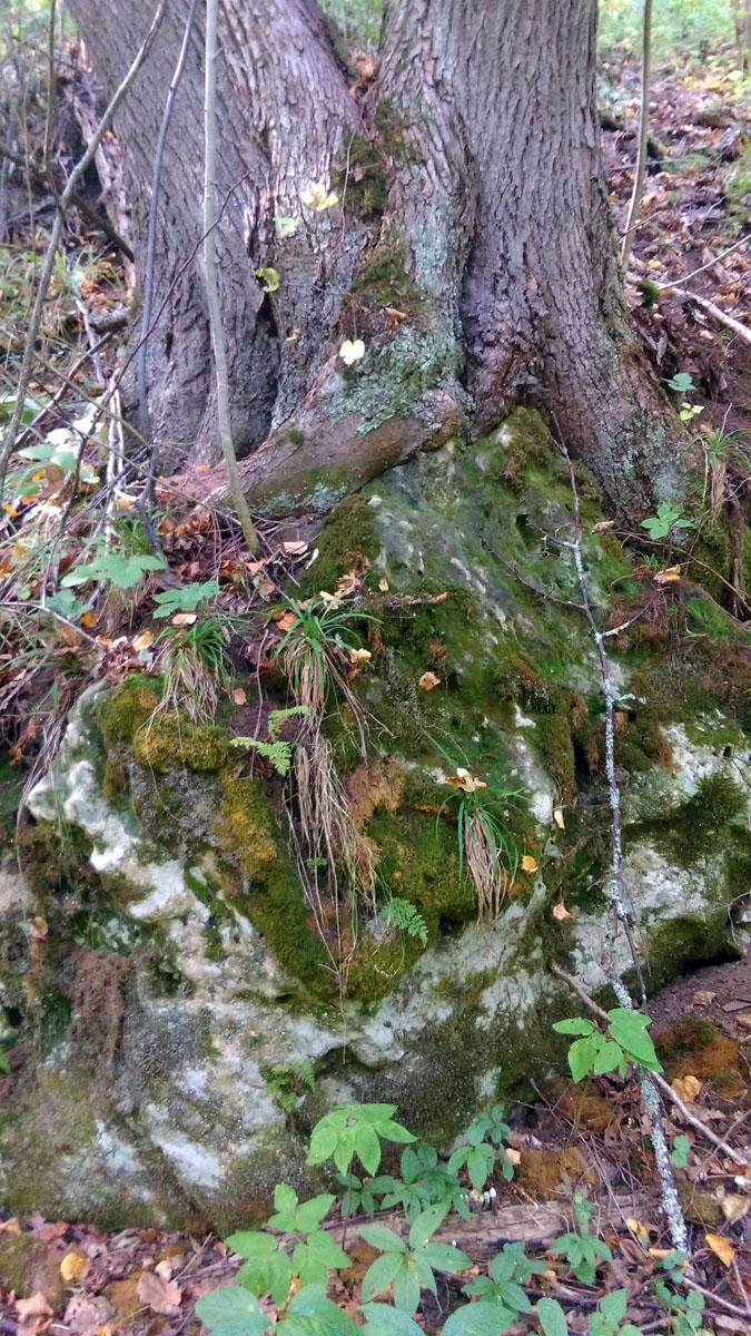 Деревья растут на камнях.