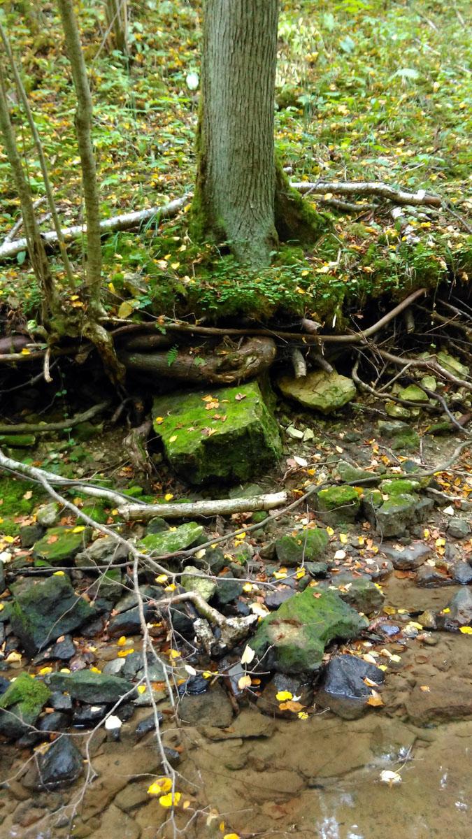 Судя по размытым берегам и размолотым в щепки бревнам, весной и после сильных дождей ручеек превращается в бурную горную реку.