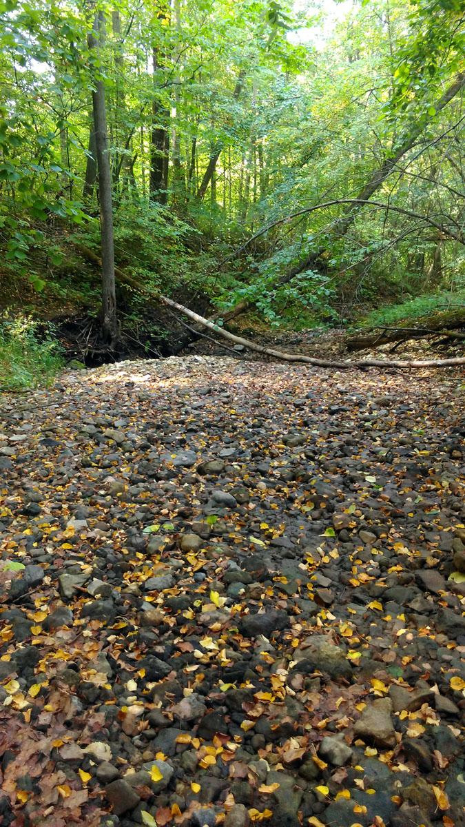А сейчас местами вода совсем уходит под камни. Словно, кто-то в лесу проложил брусчатую дорогу.
