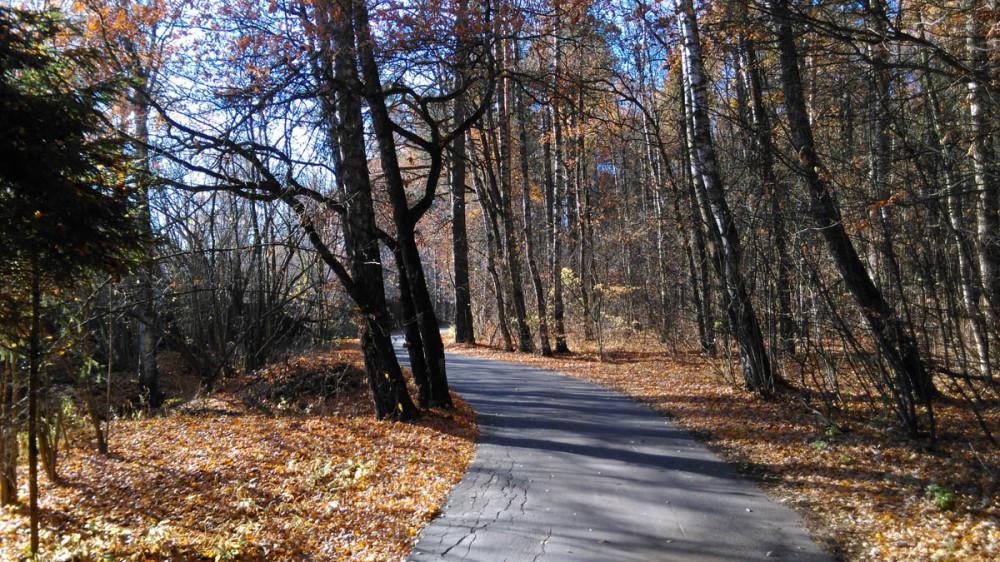 Дорога отличная. Проложена между лесом и СНТ.
