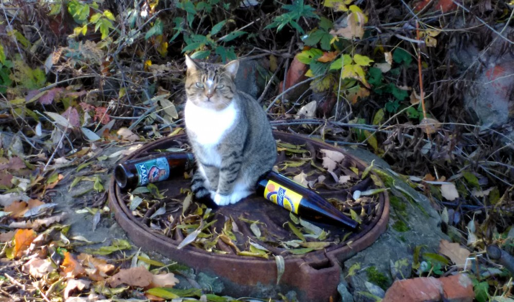 Котик, ну не надо пить такое дрянное пиво! Лучше бы выпил одну бутылку, но хорошего.