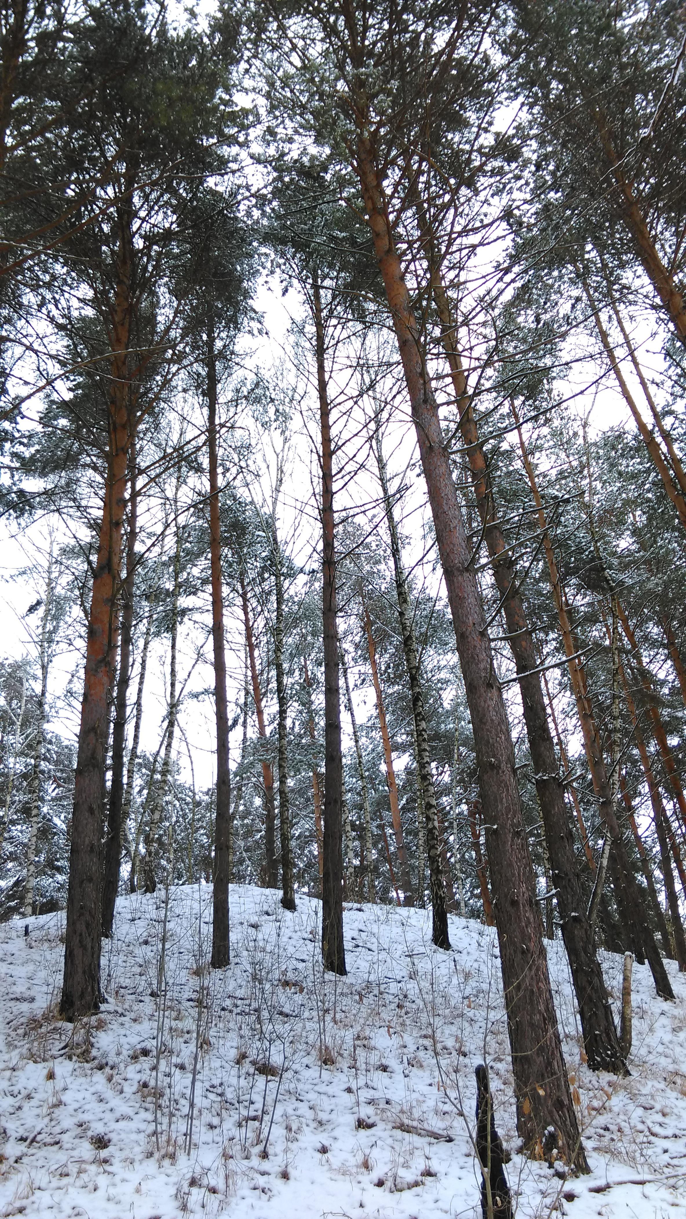 Бывший песчаный карьер в лесу около Гальчино Домодедовского района. Фотографировал склон со дна.