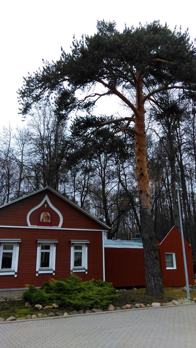 Понятно, что здания современные, особенно это заметно по строению справа.
