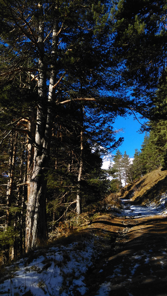 Серпантин дороги ведет между могучих деревьев.