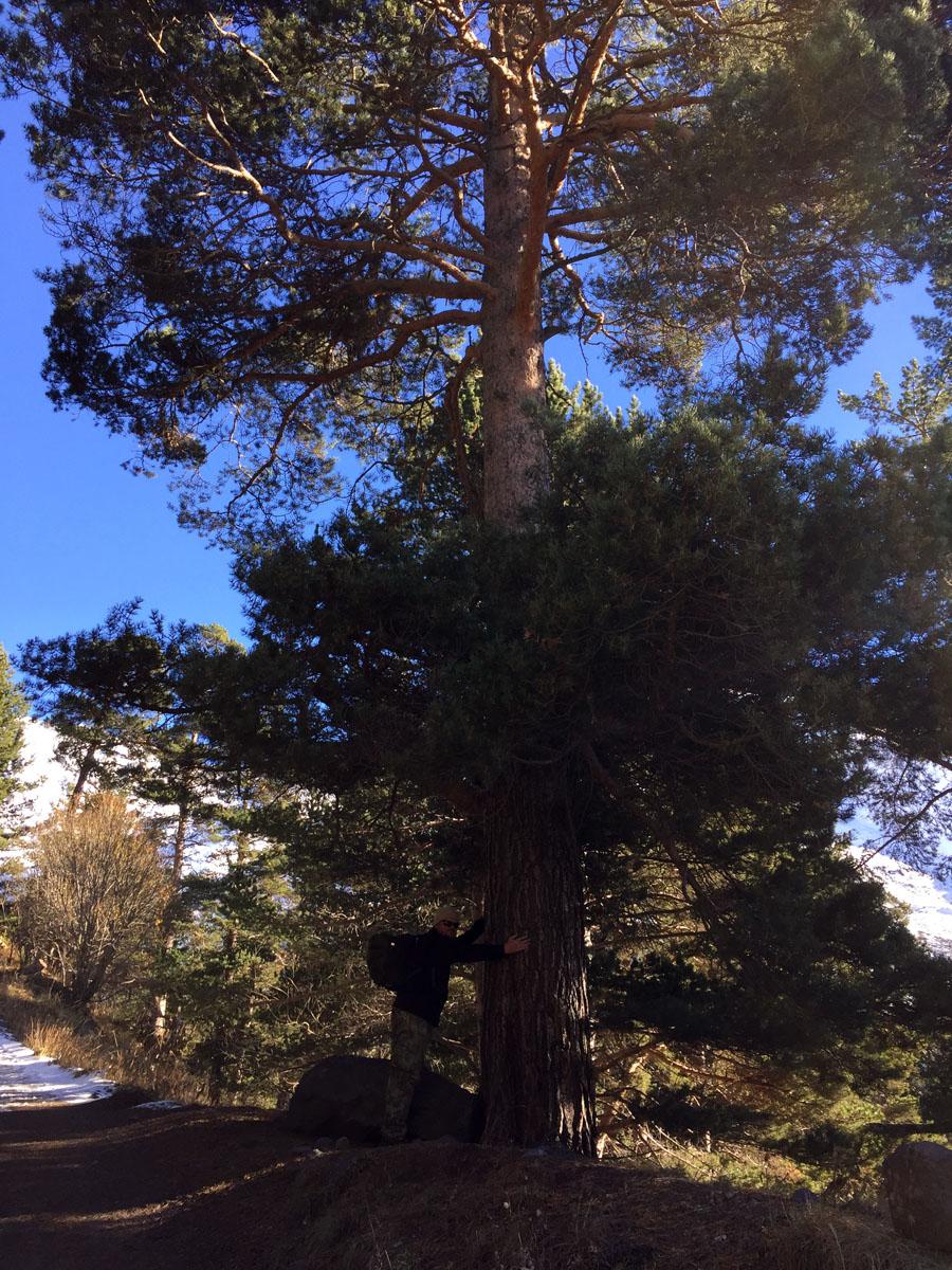 Люблю большие деревья...
