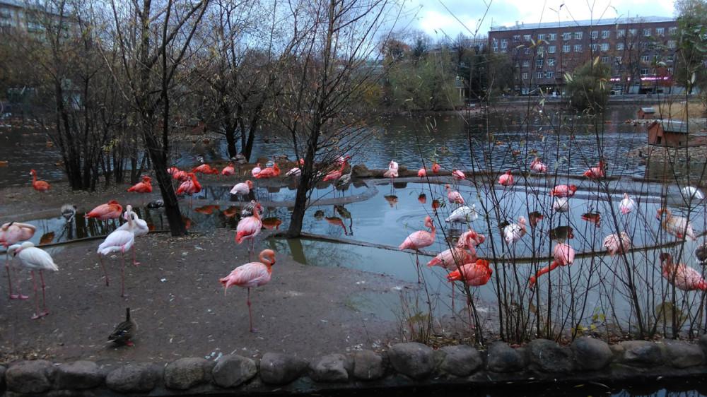 Розовый Фламинго... Только у меня в голове зазвучала песня в исполнении Алены Свиридовой?