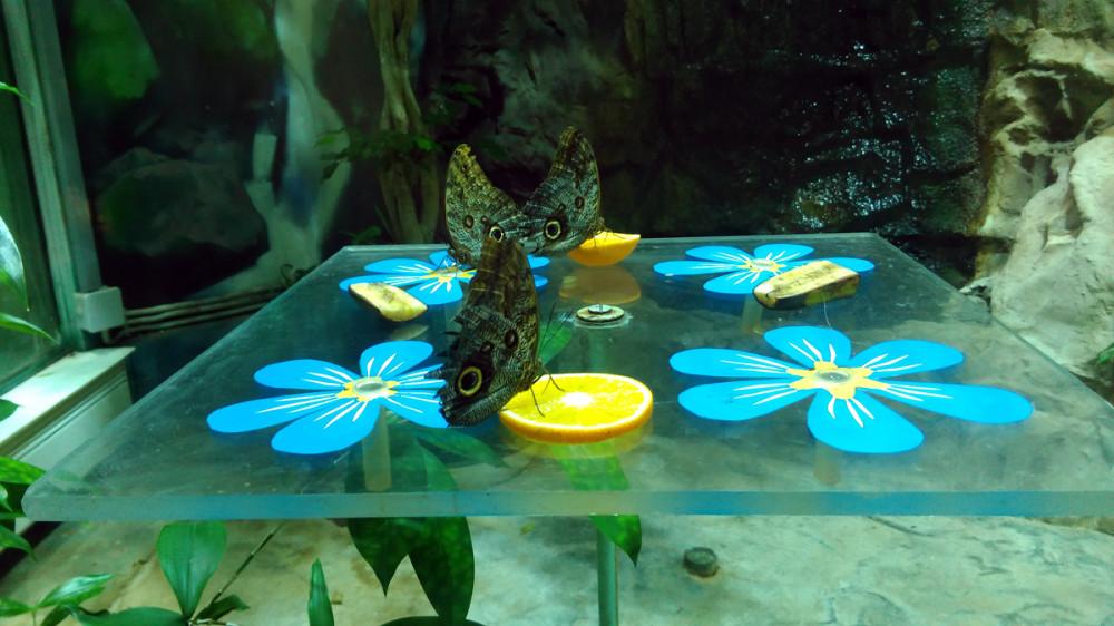 Бабочки закусывают коньяк лимоном. :-))