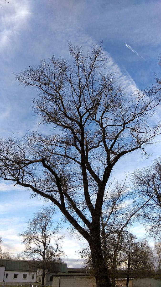 Красивое большое дерево на фоне синего осеннего неба.
