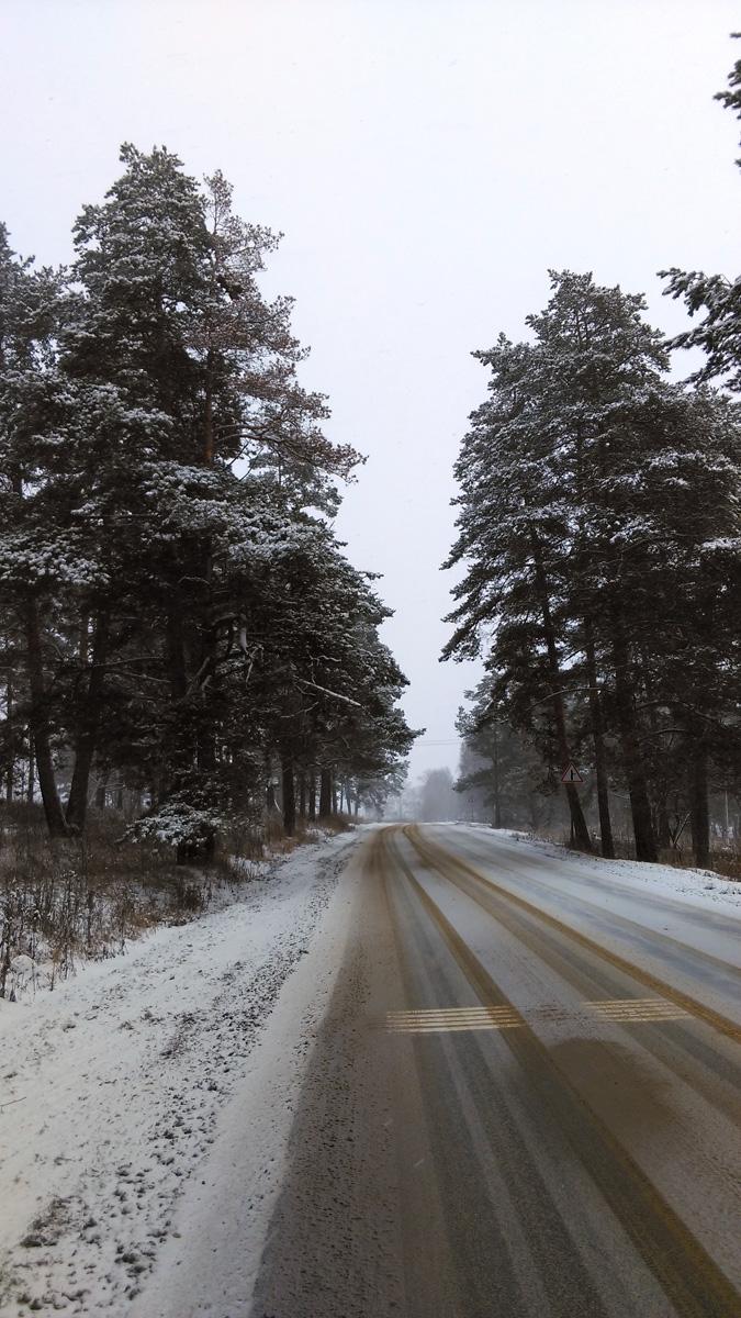 Вдоль дороги красивые деревья.
