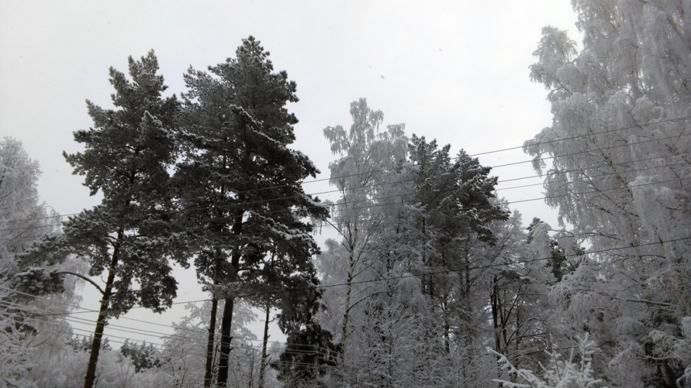 Декабрь подарил нам необычное явление, морозный туман. Благодаря ему деревья покрылись красивым инеем.