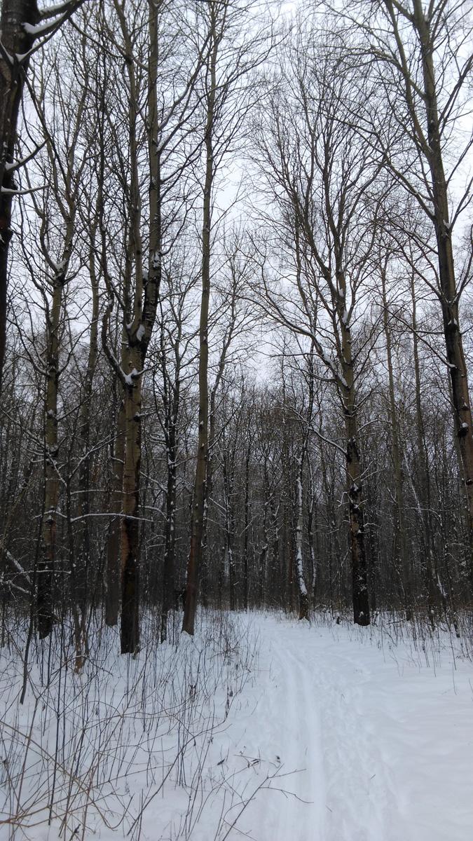 Дальше наш путь лежал через лес домой