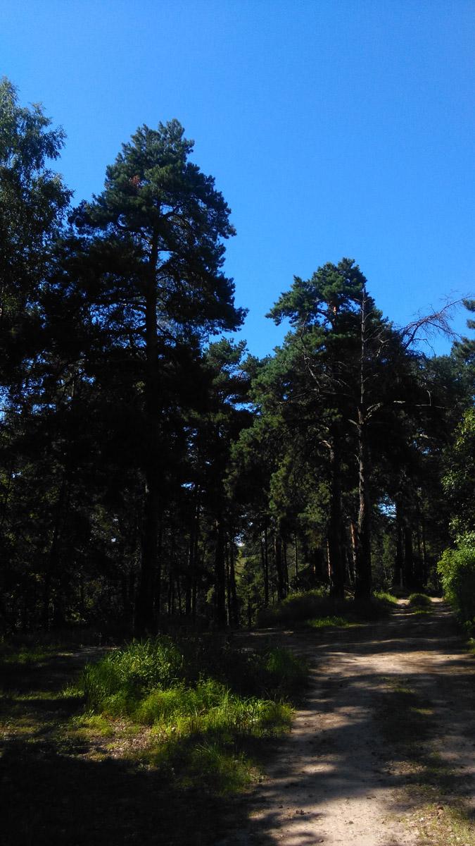 Обратно на станцию возвращаемся через тенистый лес